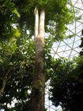 1 large tree