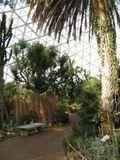 2 desert palms 2