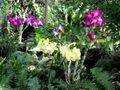 1 orchids